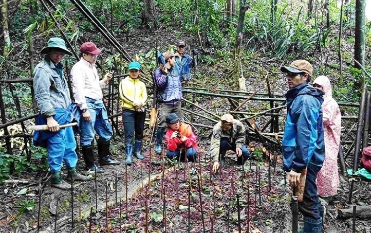 Mô hình trồng sâm Ngọc Linh dưới tán rừng cộng đồng tại thôn Tu Mơ Rông, xã Tu Mơ Rông (huyện Tu Mơ Rông)